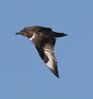 bonxie_westwat_06112011_img_2503_medium.jpg