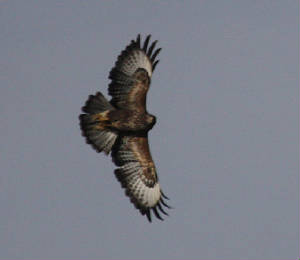 buzzard_dc_20102012_img_8658_medium.jpg