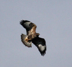 buzzard_dc_20102012_img_8664_medium.jpg