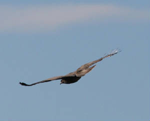 buzzard_mwfd_07112012_dc_img_0038_medium.jpg