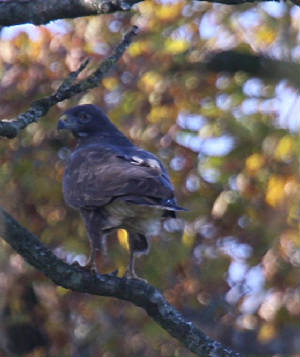 buzzard_mwfd_07112012_dc_img_0076_medium.jpg