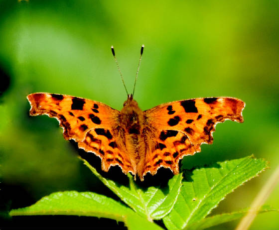 comma_mtcongreve_27072013_lc_1.jpg