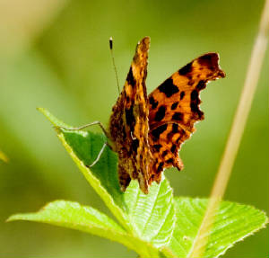 comma_mtcongreve_27072013_lc_2.jpg