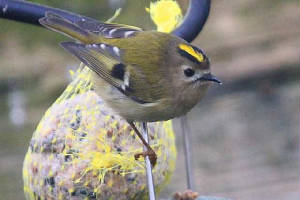 goldcrest_strandside_09012010_img_2559_small.jpg