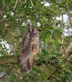 leowl_nrvillierstown_13062012_img_8756_medium.jpg