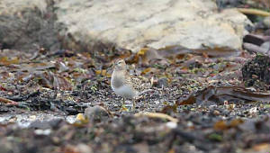 pecsand_whitingbay_11092010_img_2643_small.jpg