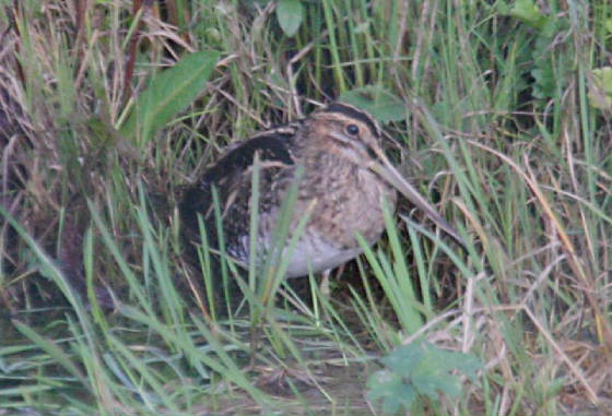 snipe_portlaw_01112011_img_1218_small.jpg