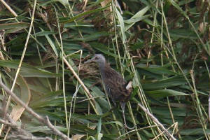 waterrail_brickeycanal_14102009_img_2081_small.jpg
